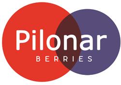 Pilonar Berries